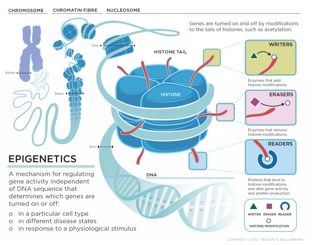 Epigenetics-Definition